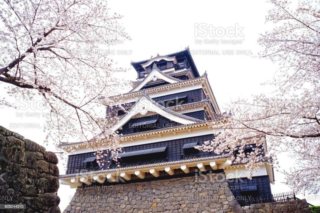 Kumamoto Castle (Kumamoto-jo) with Cherry Blossom. stock photo