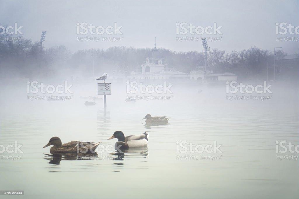 Kunsthalle Budapest Ice Rink stock photo