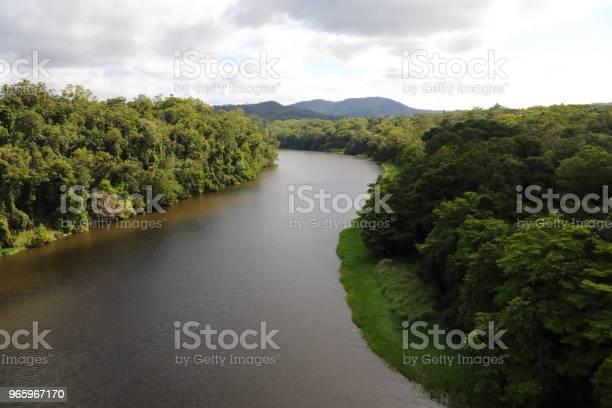 Куранда Тропический Тропический Лес — стоковые фотографии и другие картинки Австралия - Австралазия
