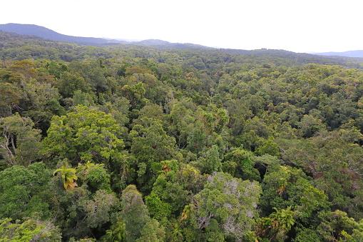 Kuranda Regenwald Stockfoto und mehr Bilder von Australien