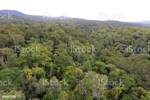 Kuranda Tropical Rain Forest Stock Photo - Download Image Now