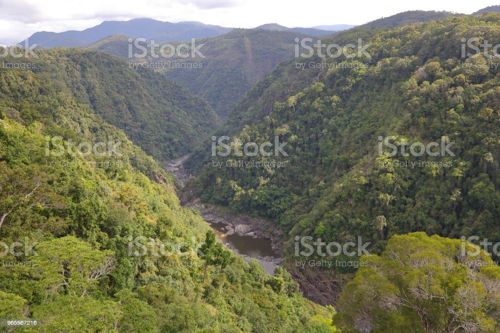 Kuranda Regenwald - Lizenzfrei Australien Stock-Foto