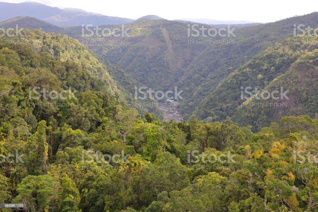 Kuranda tropical rain forest - Royalty-free Australia Stock Photo
