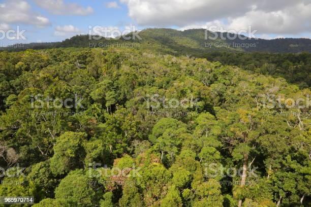 Kuranda Tropical Rain Forest — стоковые фотографии и другие картинки Австралия - Австралазия