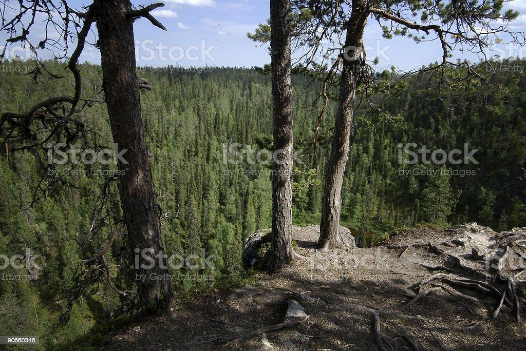 Kuusamo Finland Forest stock photo