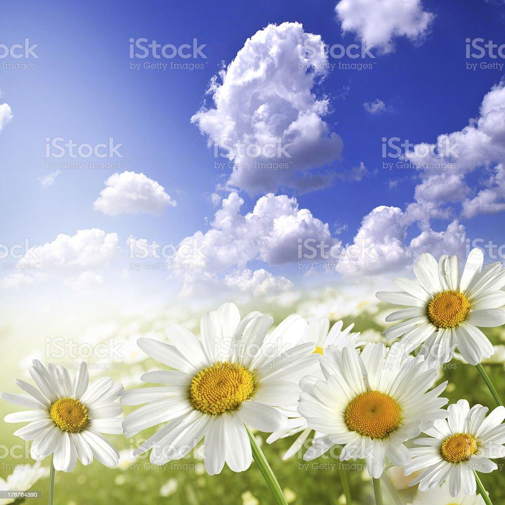 kwiaty royalty-free stock photo