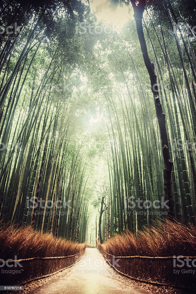 Kyoto Bambo Forest in Japan stock photo