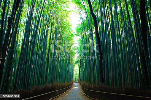 Footpath through the Kyoto Bamboo Forest