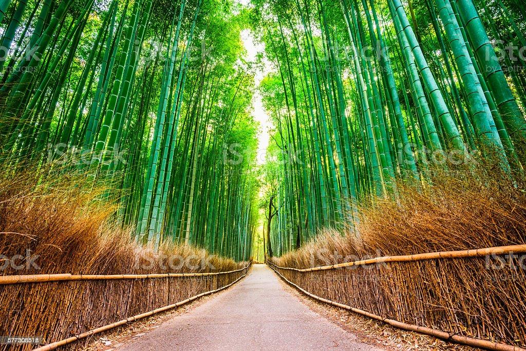 Foresta di bambù di Kyoto - foto stock