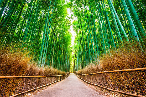 kyoto bosque de bambú - kyoto fotografías e imágenes de stock