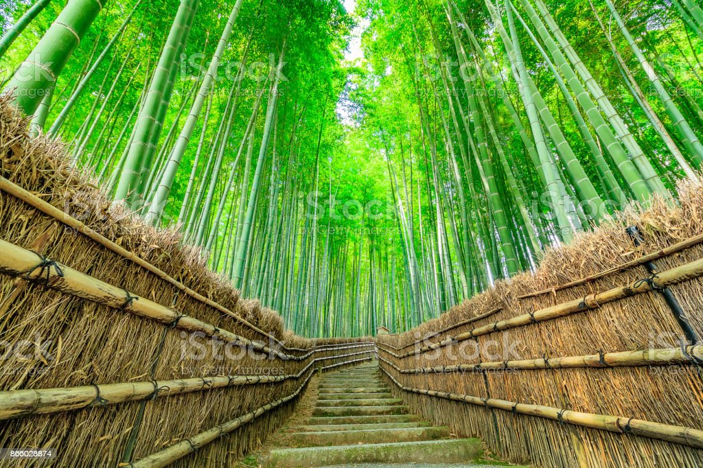 Kyoto bamboo forest - foto stock