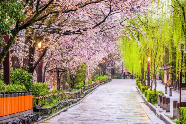 kyoto en resorte - kyoto fotografías e imágenes de stock