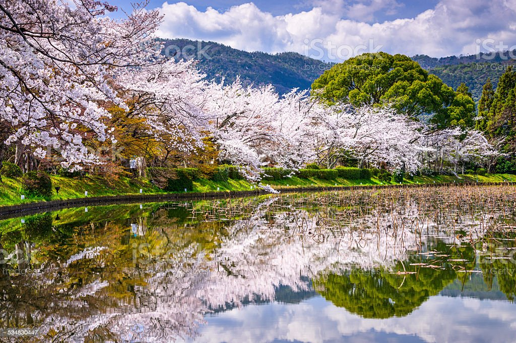 Kyoto in the Spring stock photo