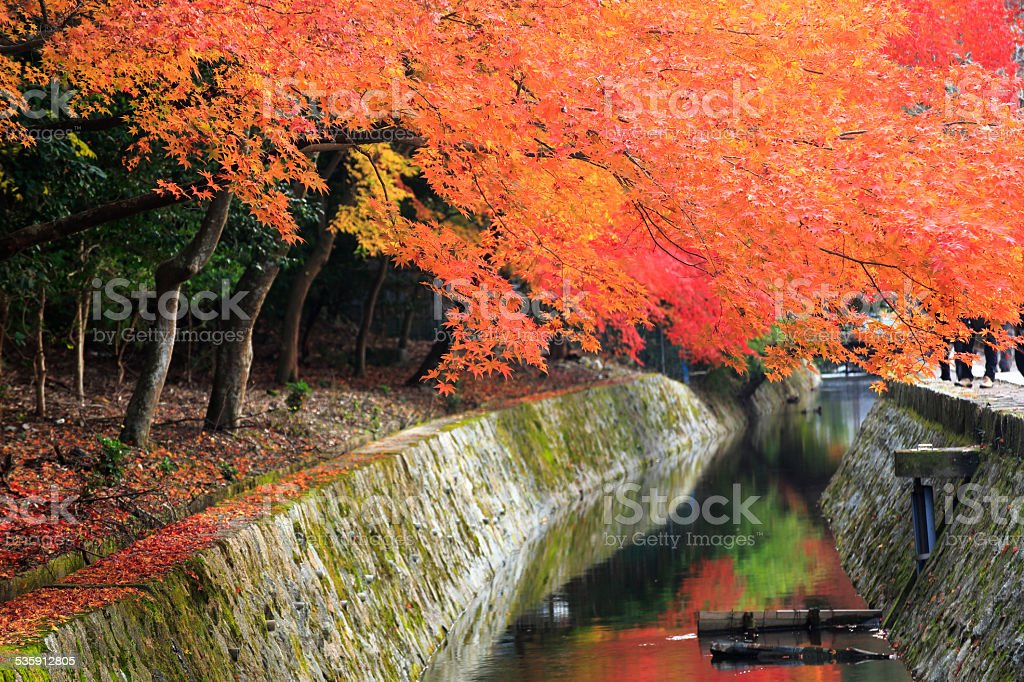 Kyoto, Japan at Philosopher's path in the autumn stock photo