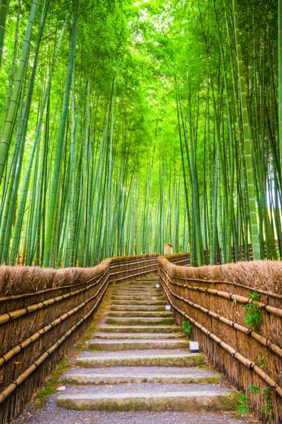 kyoto, japan bosque de bambú - kyoto fotografías e imágenes de stock