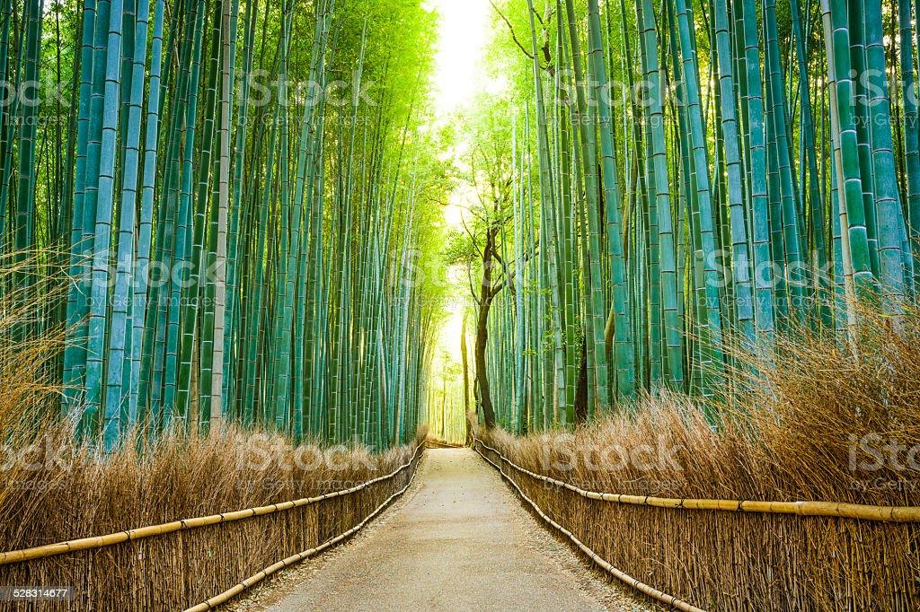 京都、日本の竹森林公園 ストックフォト