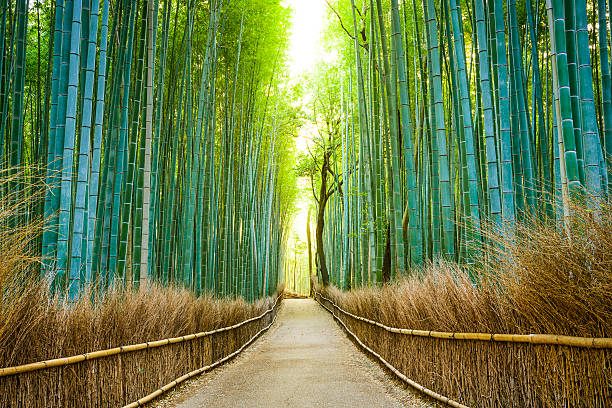 kyoto, japan bamboo forest - non urban scene stock photos and pictures