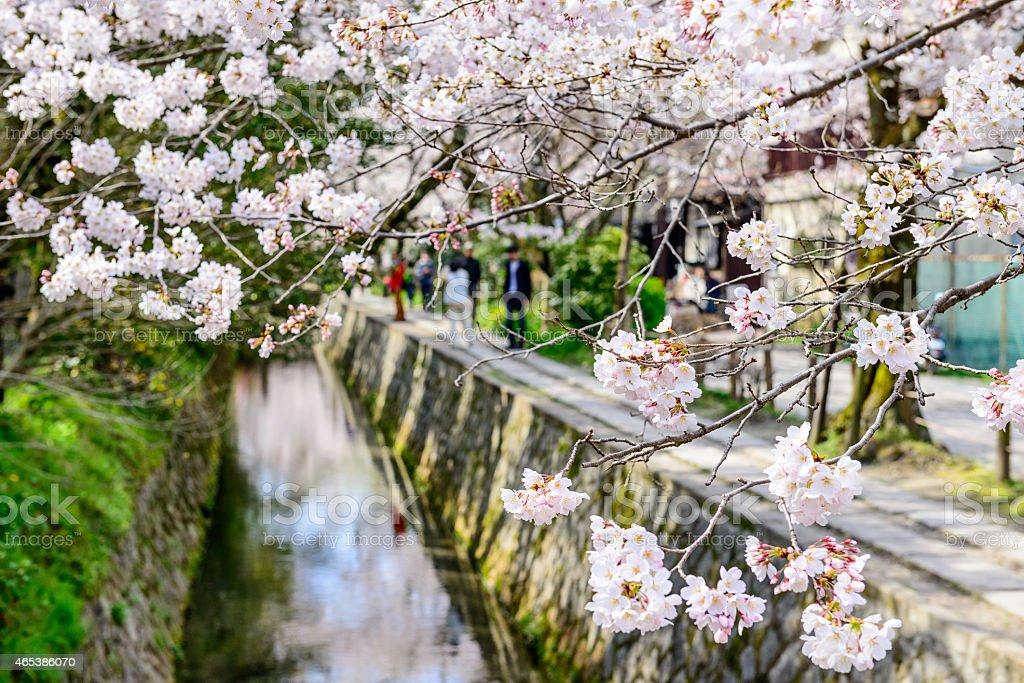 Kyoto, Japan in Spring stock photo