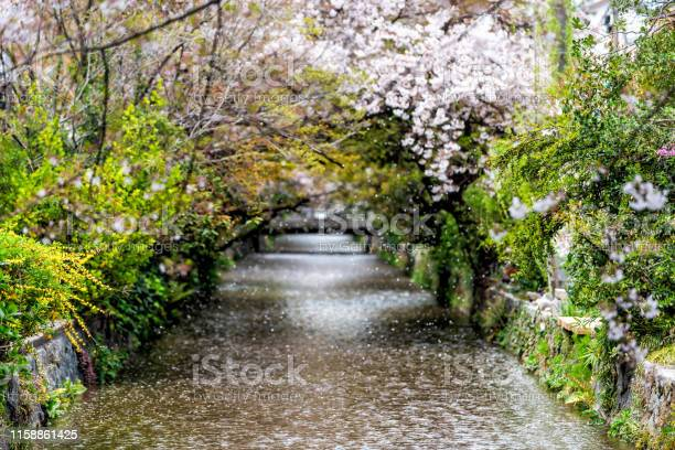 Kyoto residential neighborhood in spring with takase river canal in picture id1158861425?b=1&k=6&m=1158861425&s=612x612&h=o1sprrvsieuzectoylq4tfk aqxe  qrwdsezxktqmq=