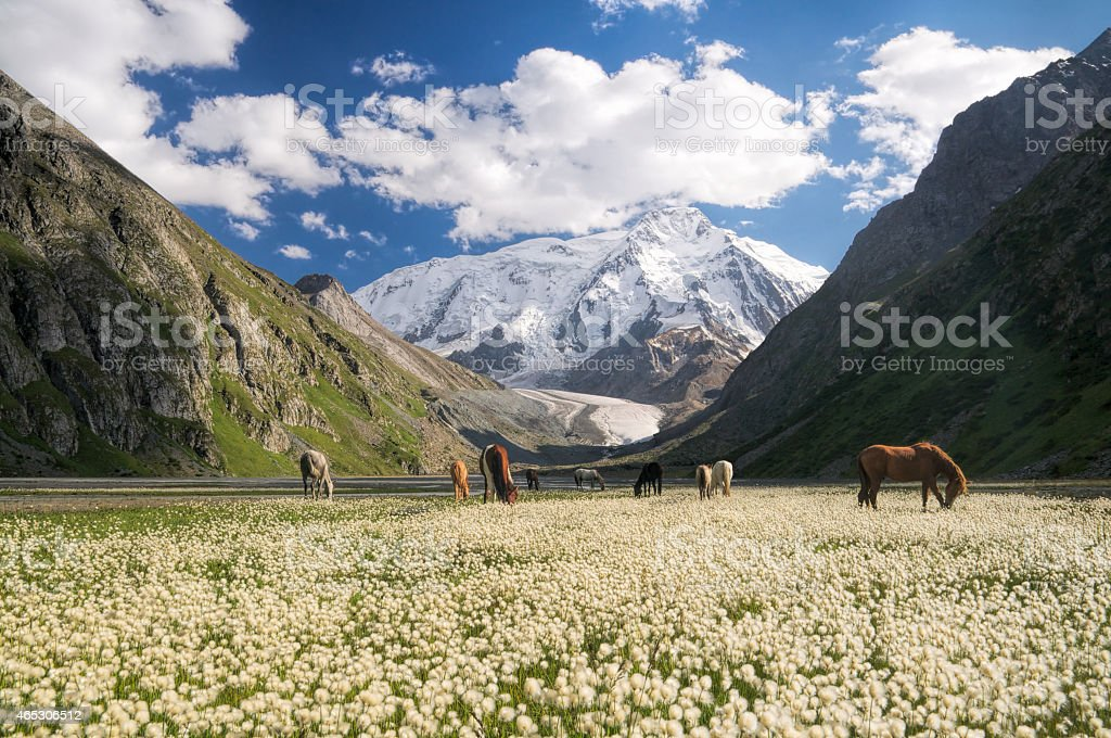 Kyrgyzstan near Karakol stock photo