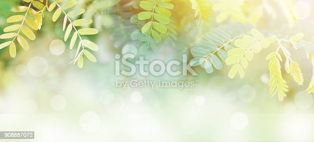 istock l green leaves at sunrise in the morning with white bokeh and copy space 908887072