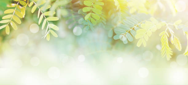 l green leaves at sunrise in the morning with white bokeh and copy space stock photo