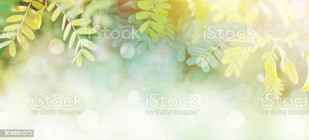 Photo of l green leaves at sunrise in the morning with white bokeh and copy space