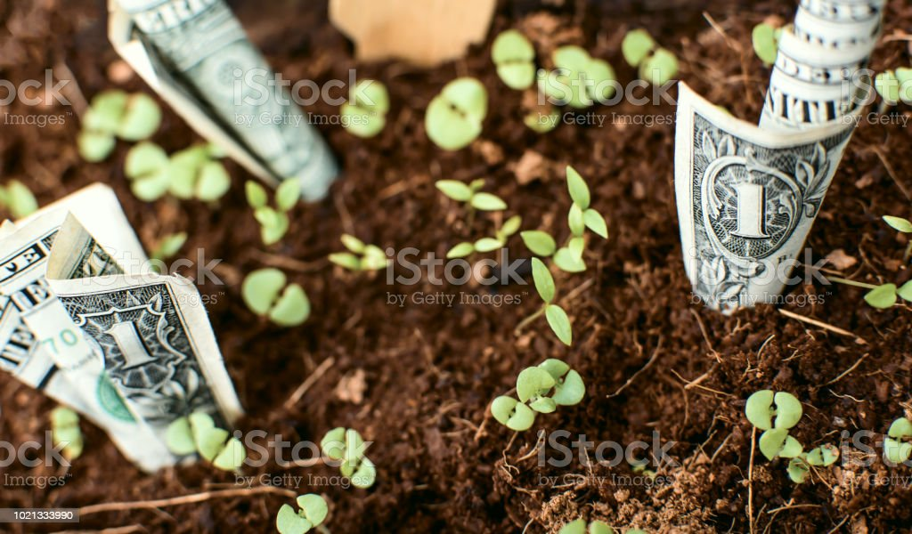 D'la bills growing out of organic soil worth sprouting seedlings stock photo