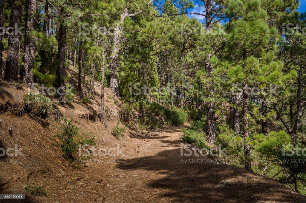 Ruta De Senderismo Del Bosque De La Esperanza Foto De Stock Y Mas Banco De Imagenes De Aire Libre Istock
