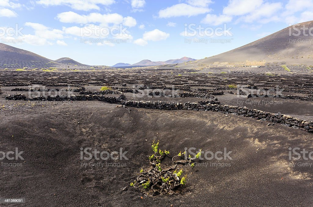 La Geria valley wine region of Lanzarote island stock photo