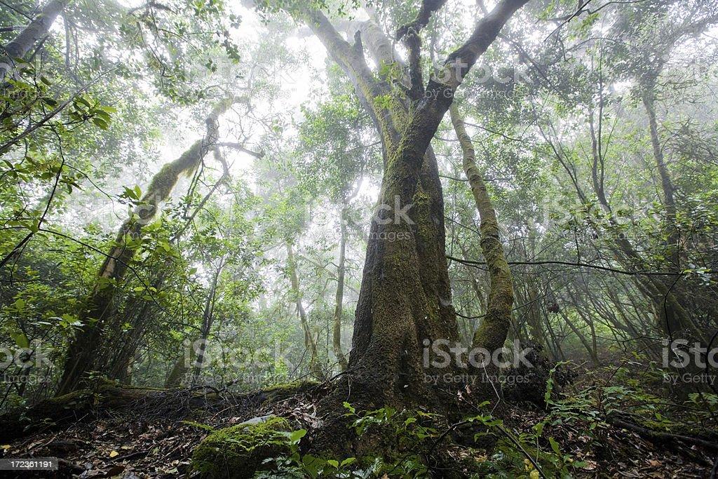 la gomera rain forest royalty-free stock photo