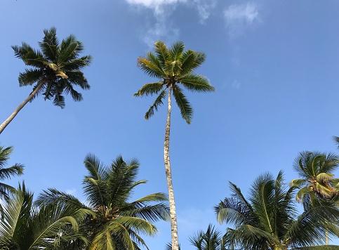 La Isla Bonita Stockfoto en meer beelden van Blauw
