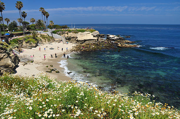 La Jolla Cove Beach at San Diego La Jolla Cove with La Jolla swimming beach at the Pacific Ocean north San Diego which shows a variety of pretty flowers in the foreground. bay of water stock pictures, royalty-free photos & images