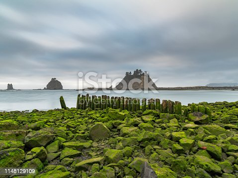 Low tide exposes the green algae covering the shoreline rocks and old seawall of worn pilings,Washington, USA.