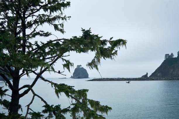 La Push Sea Rock Formation stock photo