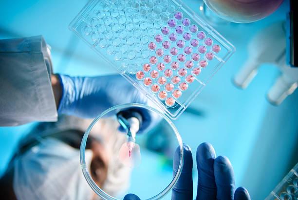 experimento de laboratorio - biología fotografías e imágenes de stock