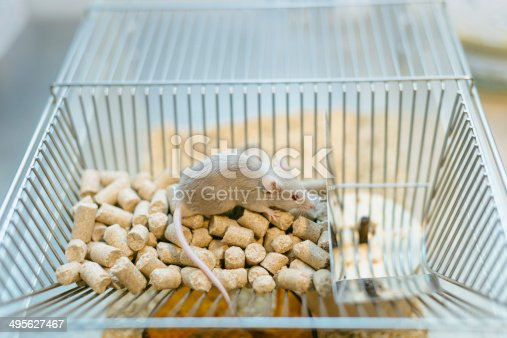 istock Lab mouse on top of home cage 495627467