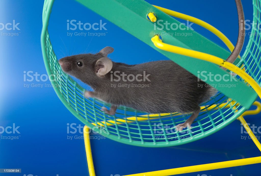 Lab mouse royalty free stockfoto
