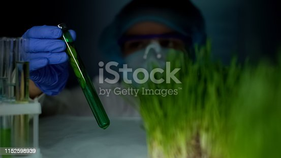 istock Lab worker comparing plant in test tube and green wheat sample, experiment 1152598939