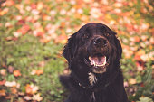Labernese smiling at the camera