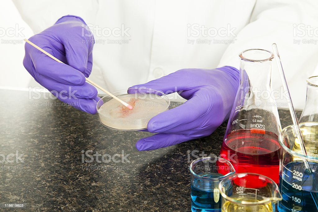 Laboratory Culture royalty-free stock photo