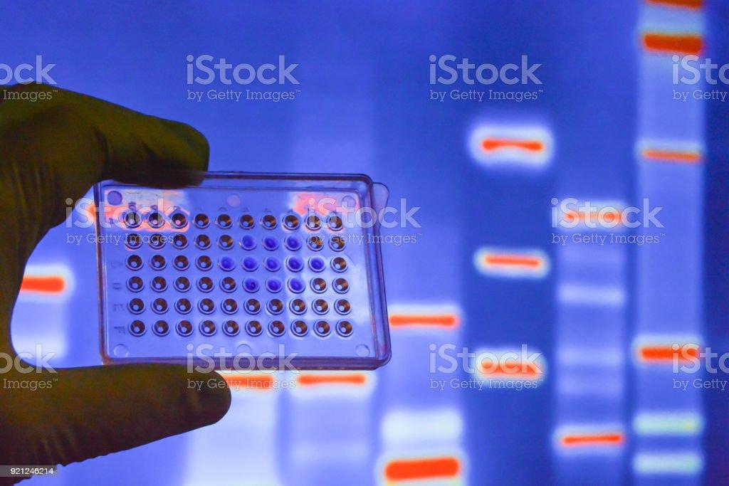 Laboratory DNA testing. stock photo