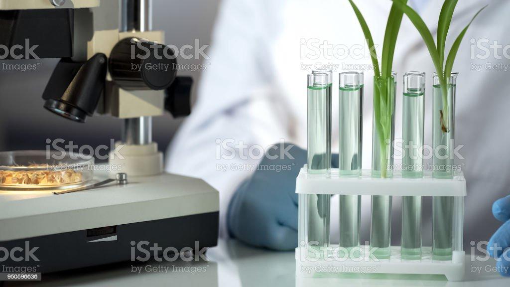Engenheiro de laboratório inventando substância que acelera a germinação dos cereais - foto de acervo
