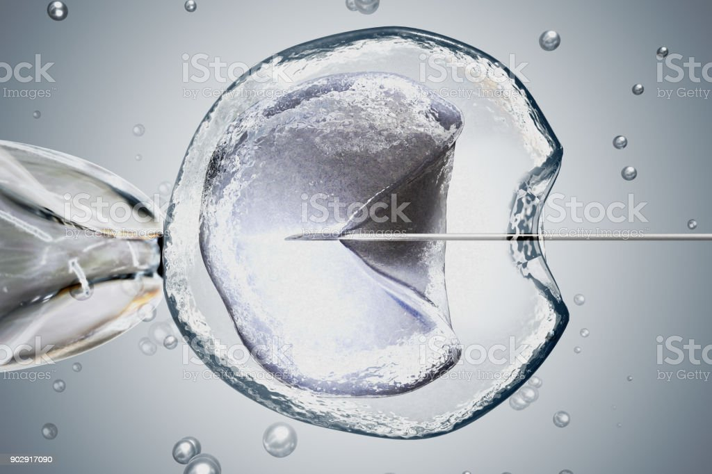 Laboratory microscopic research of IVF (in vitro fertilization). 3D rendered illustration. zbiór zdjęć royalty-free