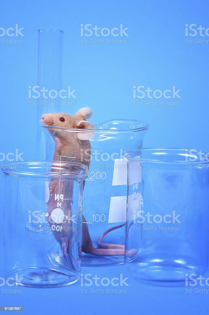 Laboratory Mouse Stock Photo - Download Image Now - iStock