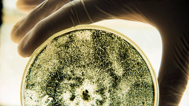 laboratory - micro organism stock photos and pictures