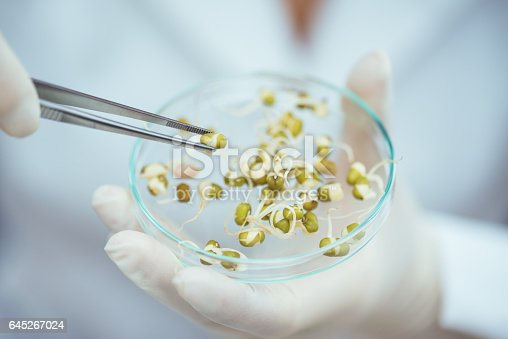 Scientist doing GMO test in laboratory