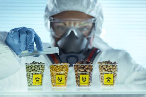 Laboratory Scientist pours dangerous liquid on beans genetic modification stock pictures, royalty-free photos & images