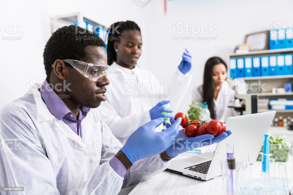 Laboratory technicians verify the quality of vegetables stock photo