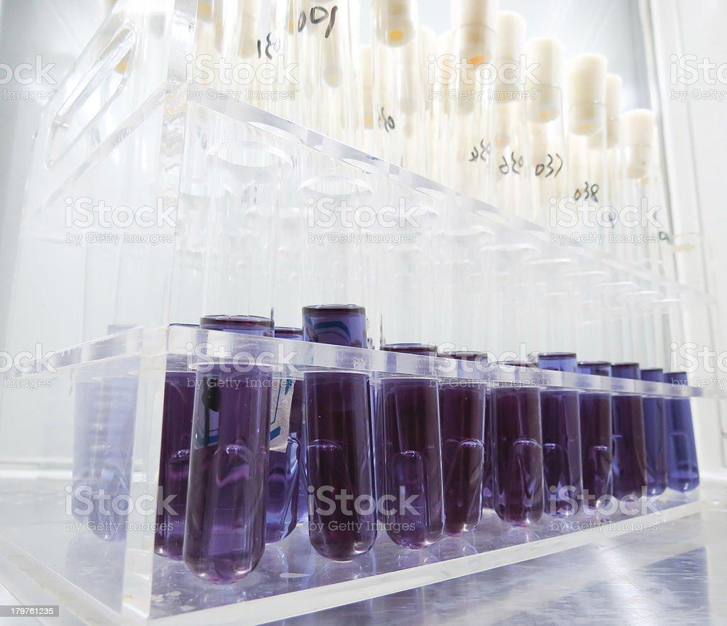 Laboratory test tubes royalty-free stock photo